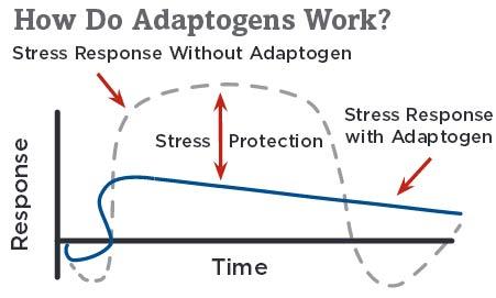 How Adaptogens Work?