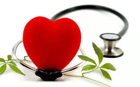 Jiaogulan Benefits - Cardiovascular Health