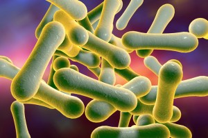 Bacteria which cause diphtheria