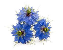 black_cumin_flowers