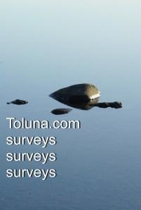 Toluna.com - surveys surveys surveys