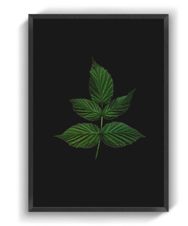 Linked Leaves