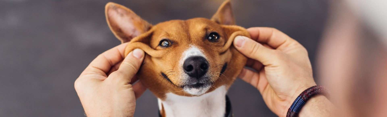 7 dicas para evitar problemas com animais em condomínios
