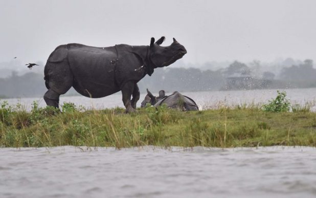 Flood in Kaziranga. Photo by Biju Boro