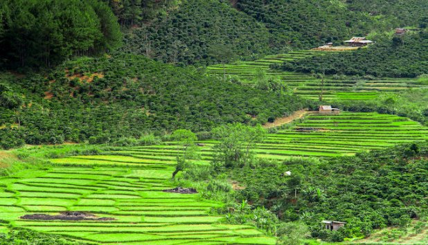Terraced rice fields in the western Himalayas [image by: Hugh Derr]
