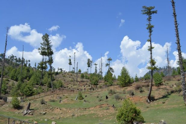 Part of a degraded forest in north Kashmir's Bandipora district [image by: Athar Parvaiz]