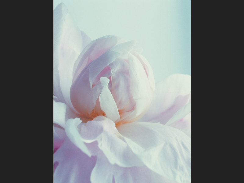 Floral Julia Smetanina