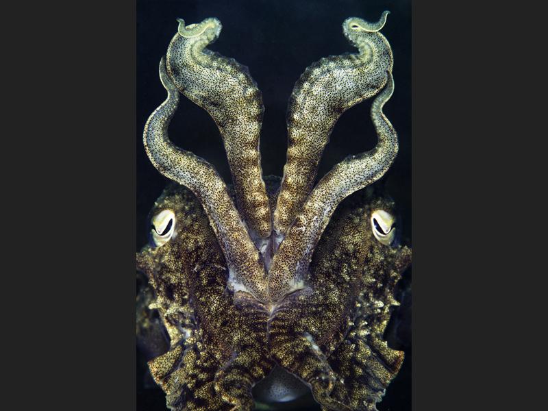 Dragon display - Winner category British Waters Macro