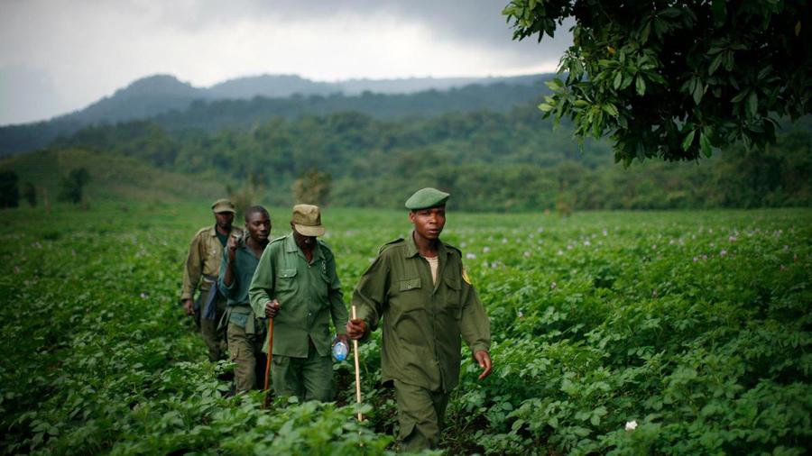 Virunga National Park ranger _ © Ryan Carter - The National
