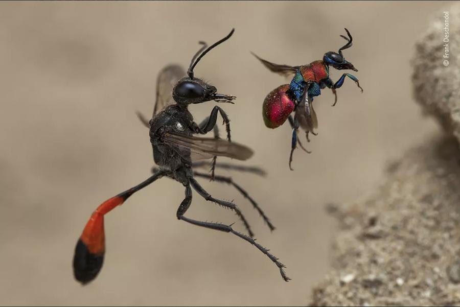 Un racconto di due vespe
