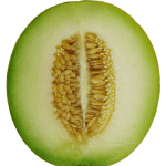 Cantaloupe_Melon_cross_section