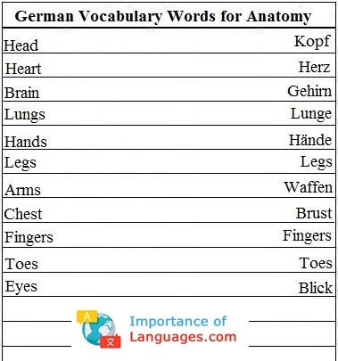 German words for Anatomy