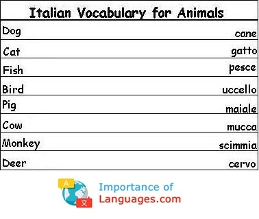 Italian Words for Animals