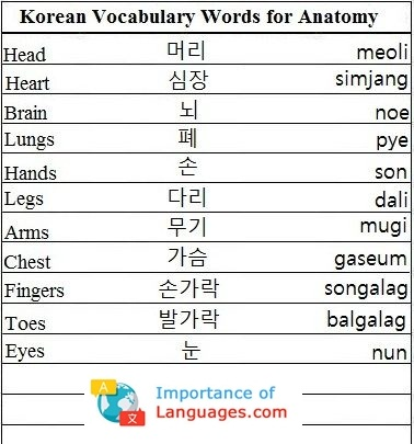 Korean Words for Anatomy