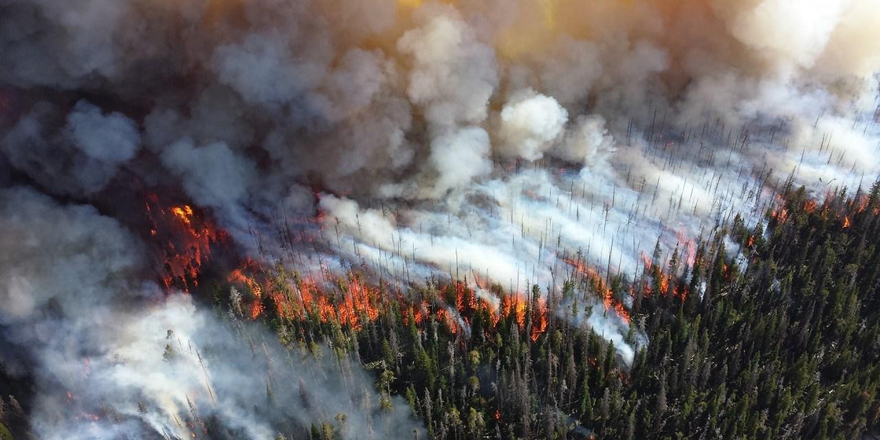 Für Cargills Palmöl brennt der Regenwald