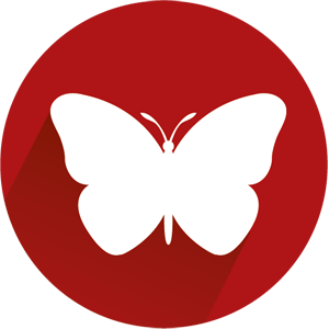 Die Schmetterlings