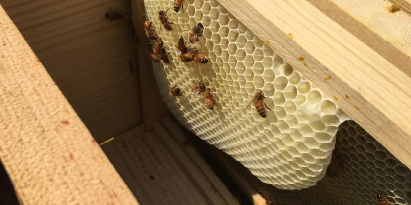 Bee Journal Update ~ 8/7/2017