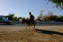 Uzbek Donkey