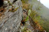 Kaktus at 3000m