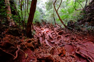Red Roots Climb
