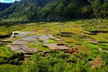 Rice Teracc