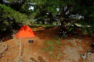 Camping under the Pinetrees