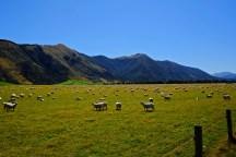 New Zealand Idyll