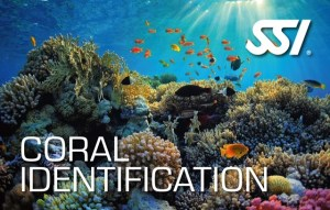 ssi specialty coral identification