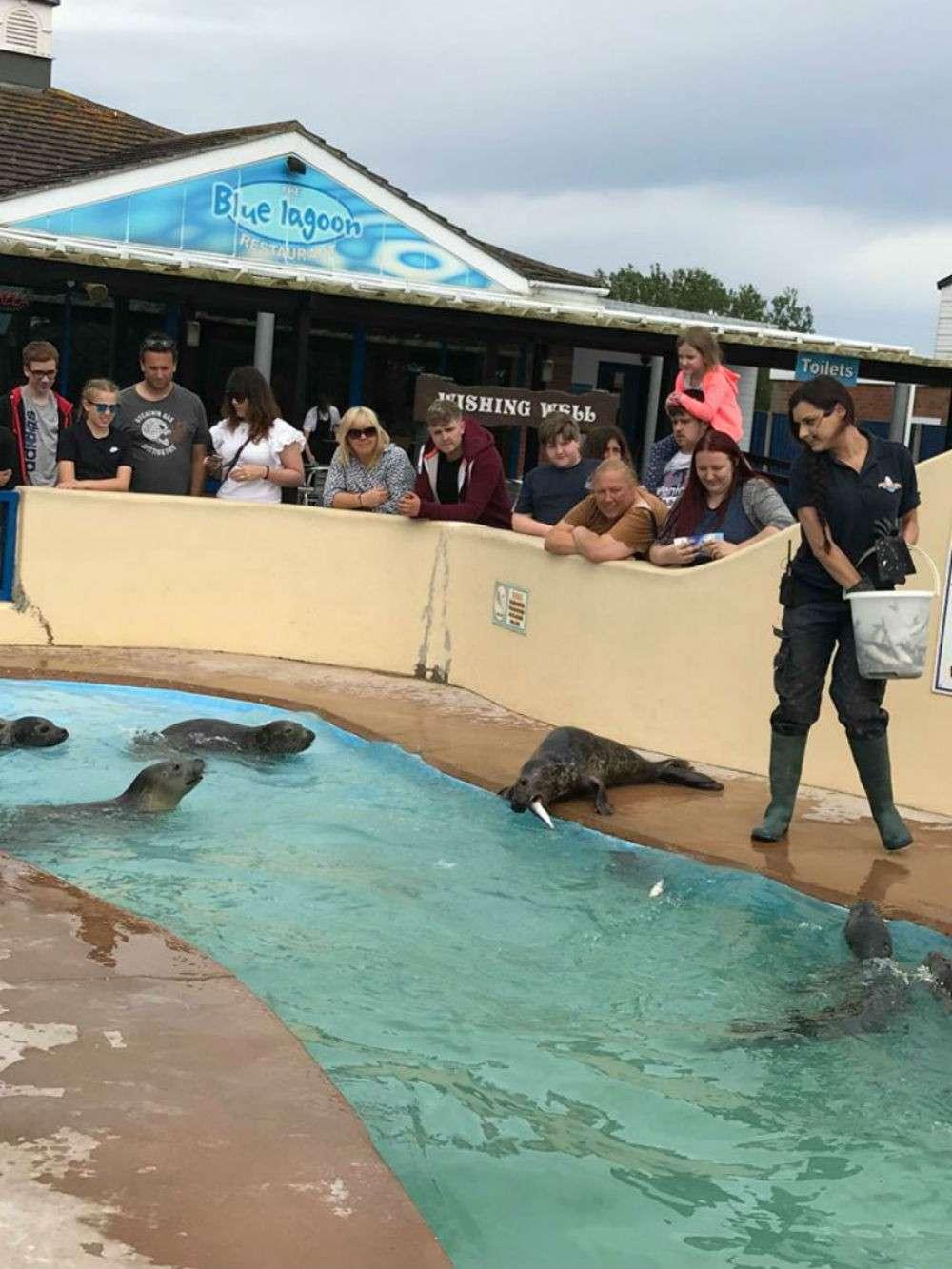 Skegness natureland seal sanctuary accept dogs