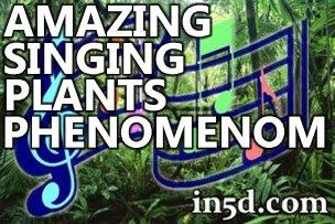 Las plantas Canto Increíble Fenómeno | in5d.com