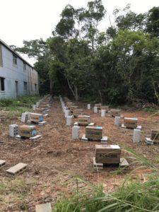 蜜蜂の巣箱