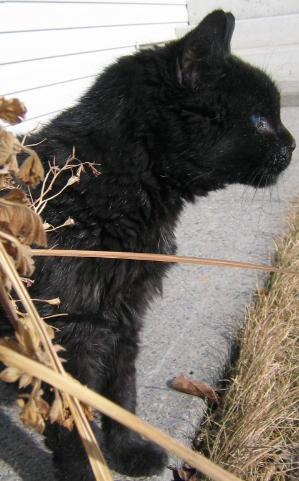 Hunter: 1983 (approx.) - April, 2006. Calgary, Alberta