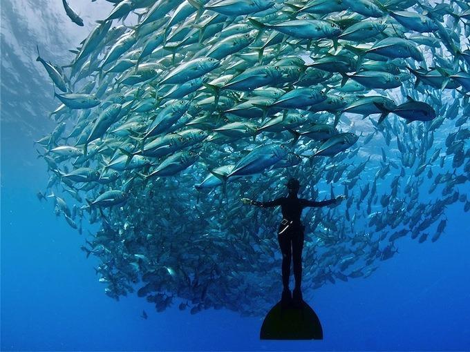 learn-to-freedive-bali