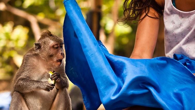 Monkey at Uluwatu temple