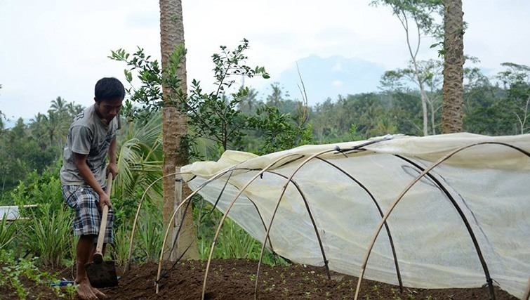 Bali Good Food's organic farm