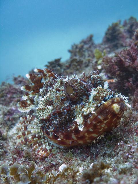 Scuba Diving Photos Photos De Plonge