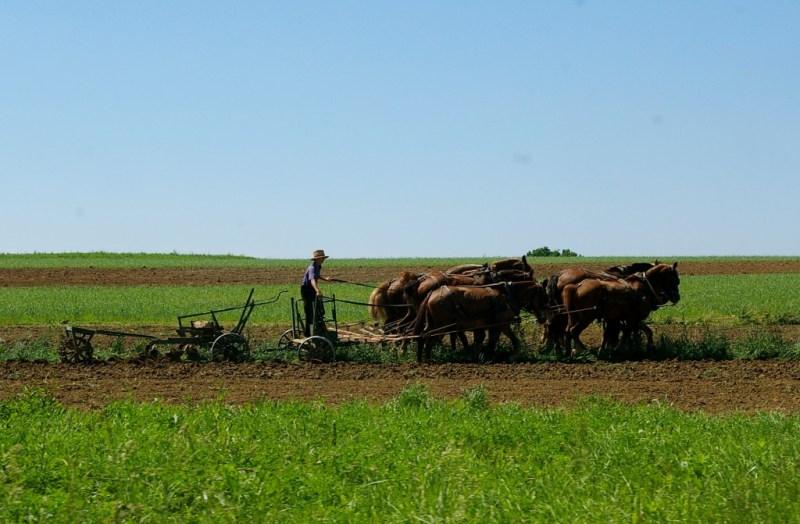Amish Farmer (2)