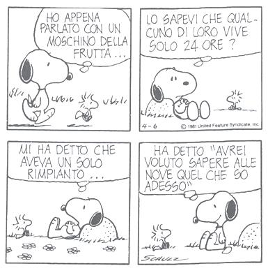 Risultati immagini per storia triste peanuts
