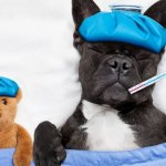 The Flu This Year Is BAD. Here's How to Keep Yourself Healthy and Your Office Safe.