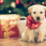 Love Animals? This Might Be the Best Black Friday Deal You'll Ever See