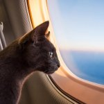 Alaska Airlines Had to Choose Between an 'Emotional Support Cat' and a 15-Year-Old Passenger With Allergies. Want to Guess Who Won?