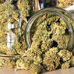 Recreational Marijuana Is (Very Likely) Coming to New York