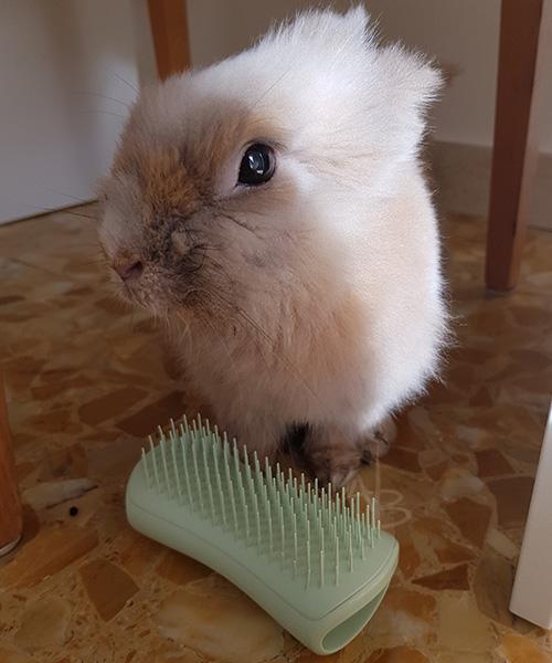 Prulli per Pet Teezer (Puppy Brush)