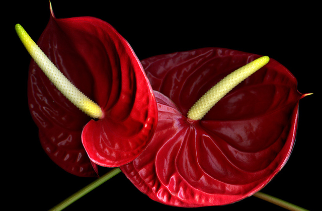 60 beautiful flower pictures