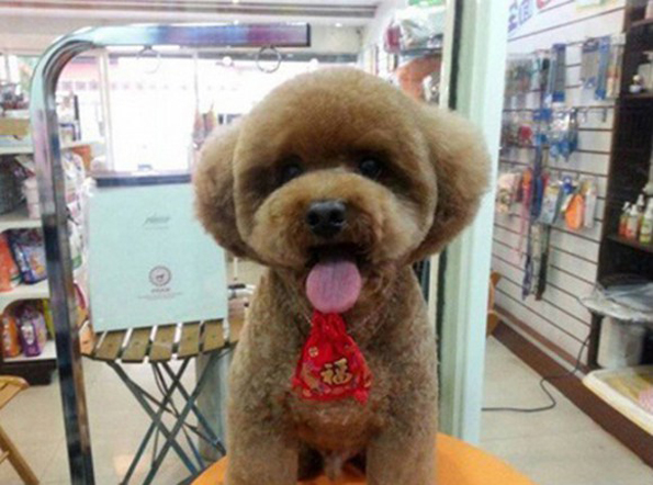 Dogs Are Getting Their Hair Cut To Have Square Round Heads