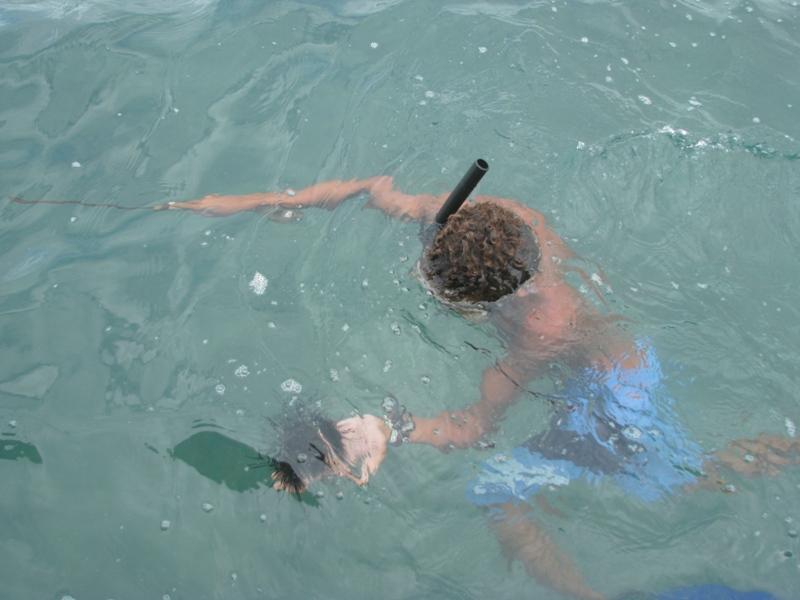 Mergulhador devolvendo o ouriço do mar à água