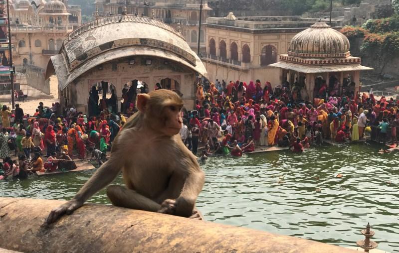 O que fazer em Jaipur - Templo dos Macacos em Jaipur