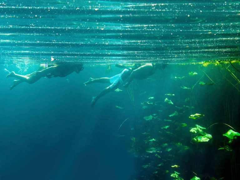 Xenotes Tour Cancun
