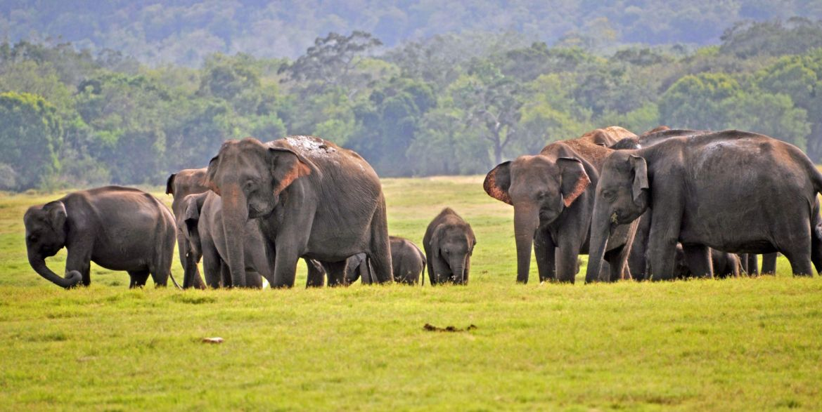 Proposed Wild Elephant Management Reserve will be published before midnight