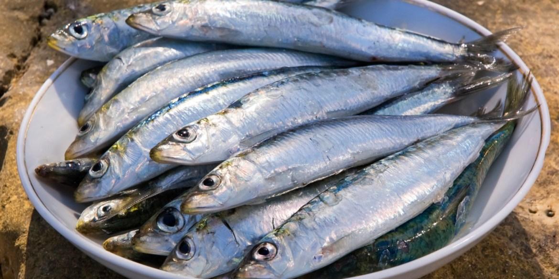 Gazette on banning light-coarse fishing